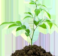 BEC Social Planting Tree